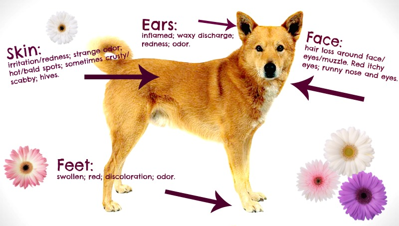 fall allergies and your pet what you need to know friendship rh friendshiphospital com