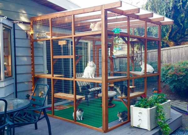 Catio S Cat Highways And Cat Shelves Oh My