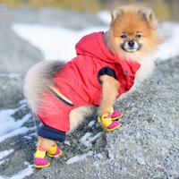 pomeranian-snow-shoes