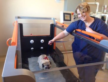 Pug walking on underwater treadmill