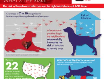 heartworm-awareness