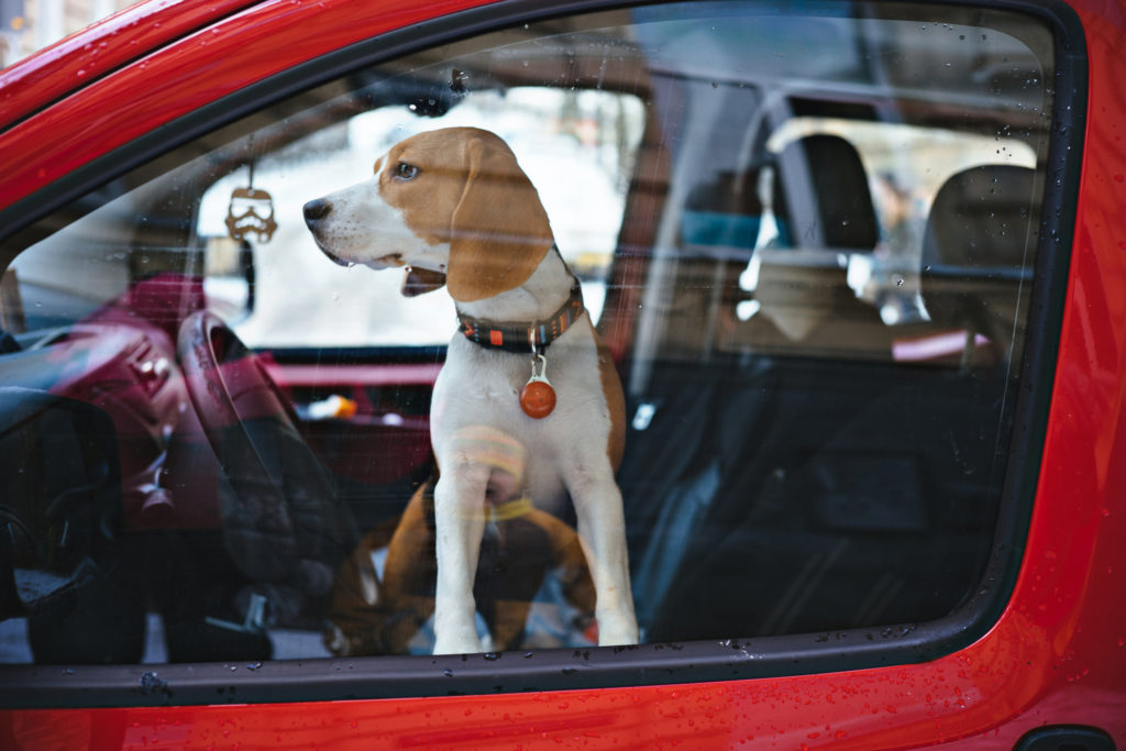 Dog alone in car