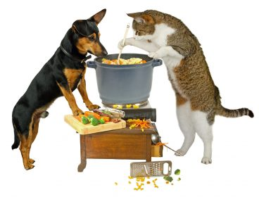 dog and cat cooking