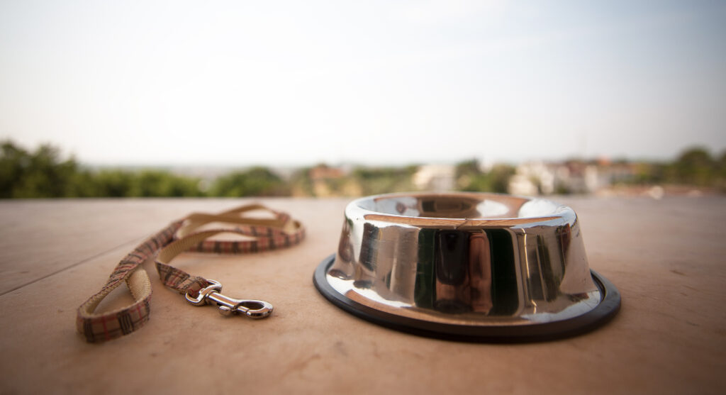 empty dog bowl and leash