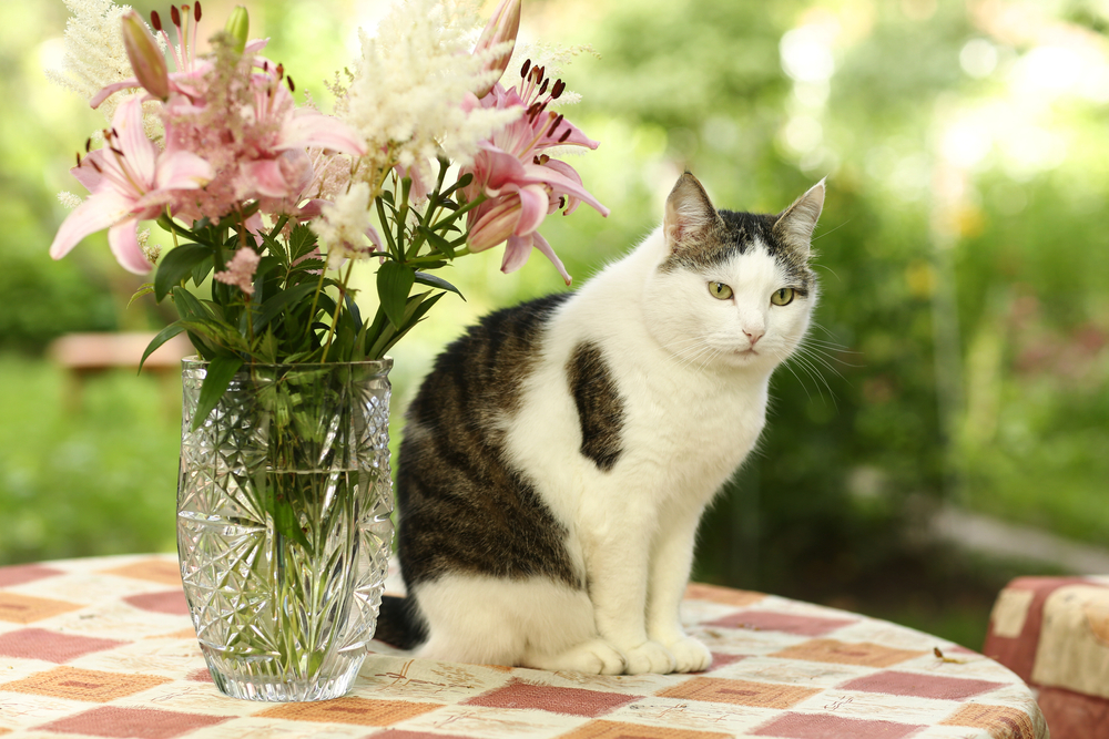 White and tabby house cat sitting on patio table next to bouquet of lilies